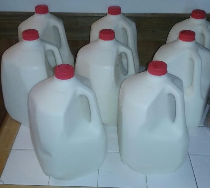 Raw Cow Milk