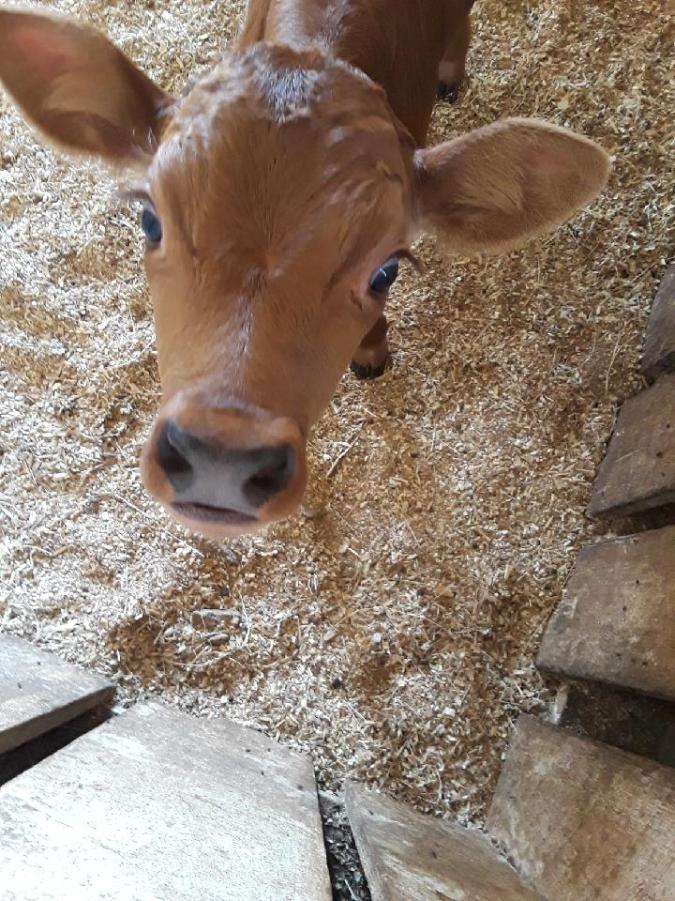 Meet our newest addition, Butterscotch!